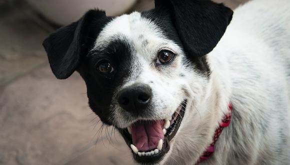 Aunque se cree que es normal que los perros tengan mal aliento, lo cierto es que esto podría ser síntoma de un problema más grave. (Foto: Krystian Beben para Unsplash)