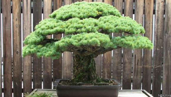 Seres y objetos que sobrevivieron a la bomba de Hiroshima