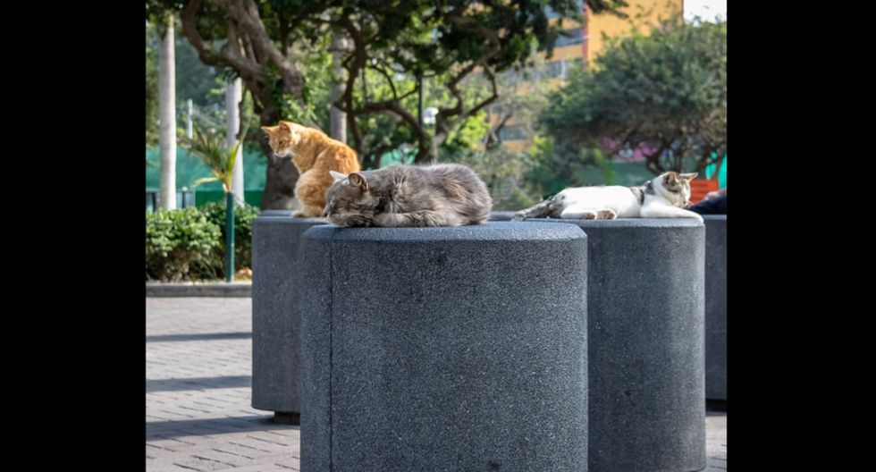 (Bonus track) Parque Kennedy (Perú). Aquí viven gatos abandonados y sus descendientes. Estos animales son cuidados por voluntarios y también esperan ser adoptados. (Foto: Shutterstock)