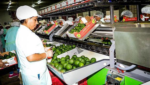 La palta peruana es uno de los productos con mayor demanda en el mercado japonés.(Foto: ADEX)