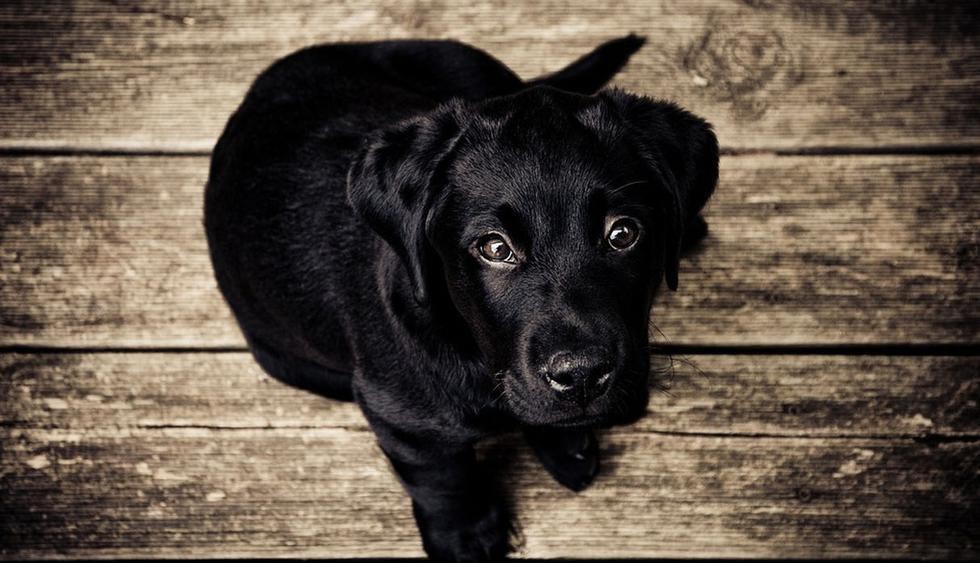 El can deseaba con muchas ansias ingresar a la vivienda. (Pixabay / Free-Photos)