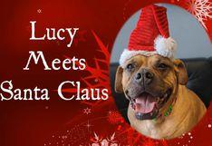 'Lucy', la adorable perrita que le 'pidió' a Santa Claus encontrar un nuevo y definitivo hogar en Navidad