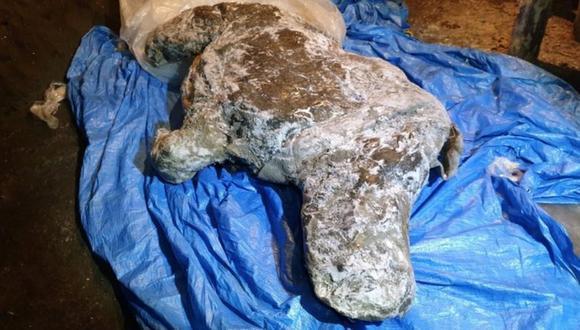 La carcasa fue encontrada por un residente local en los bancos de un río al este de la Siberia en agosto. (REUTERS)