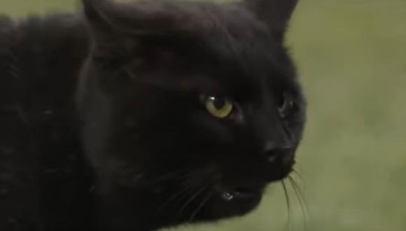 Un gato negro se metió en la cancha del MetLife Stadium en medio de un partido de fútbol americano | Foto: Captura de video YouTube /