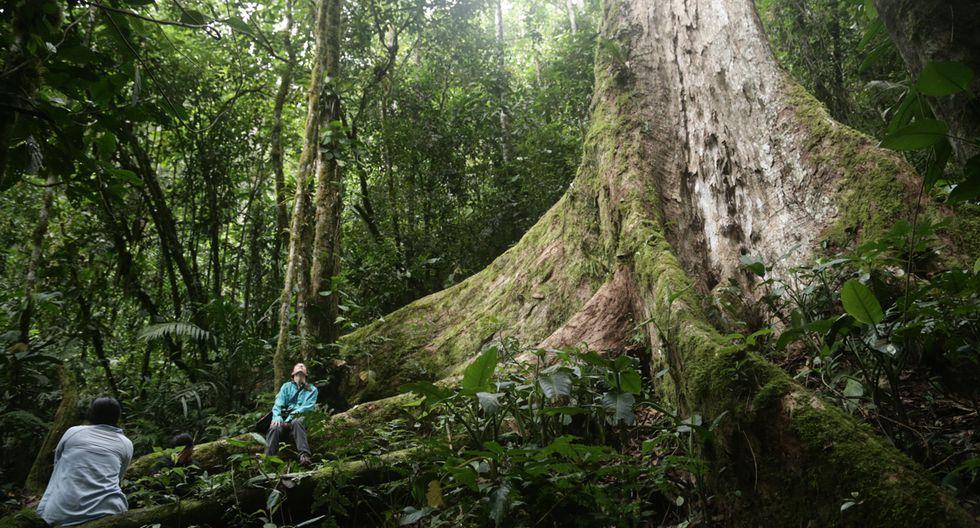 Perú Natural: un recorrido por Pampa Hermosa - 1
