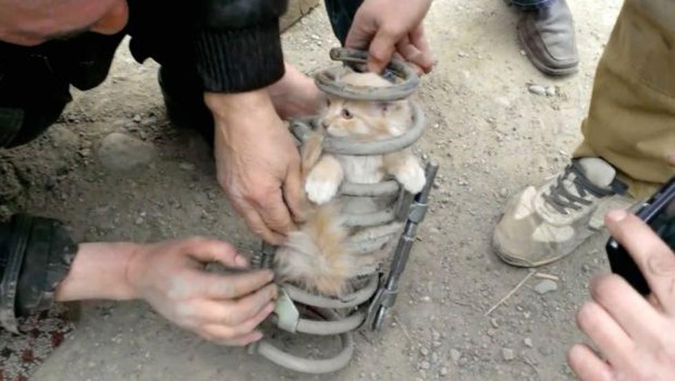 Gato viaja 80 kilómetros en la suspensión de un auto - 1