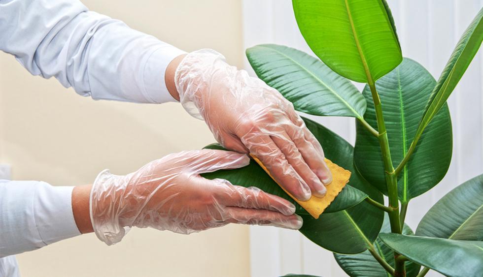 Coloca la planta boca abajo, rocía un poco de laca para el cabello sobre ella y deja secar unos segundos en la misma posición. (Foto: Shutterstock)