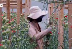 Coronavirus:  el sector floricultor de Colombia se marchita