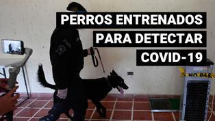 El Salvador entrena a perros policía para detectar casos de coronavirus
