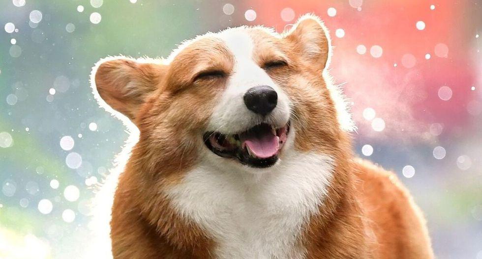 El can causó sensación entre los usuarios de las redes sociales. (Foto: Referencial - Pixabay)