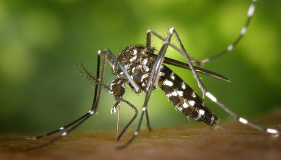 El zancudo Aedes aegypt es el que transmite el dengue. (Foto: Pixabay)