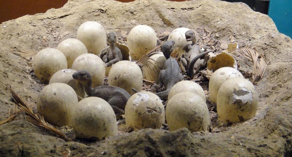 De acuerdo con quien desea vender el huevo de dinosaurio, este fue descubierto en el año 2010 en el río Onega de Arjánguelsk. (Foto: Referencial - Pixabay)