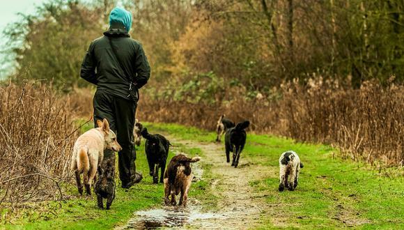 Tu perro se convierte en tu mejor amigo desde que decides adoptarlo y llevarlo a casa; desde ese día tu 'sombra se duplica'.