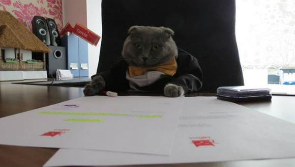 Nombran a gato gerente de empresa recien fundada en Rumania