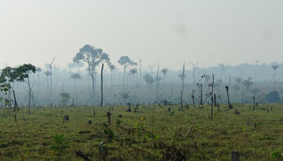 """Luis Alberto Gonzales-Zúñiga, director Ejecutivo del Serfor, explicó a El Comercio que si bien se debe resaltar que el Gobierno mantenga la tendencia de reducir la deforestación, la pérdida de aproximadamente 125 mil hectáreas por año es """"extredamamente alta"""". (Foto: Carbon Decisions International/Flickr)."""