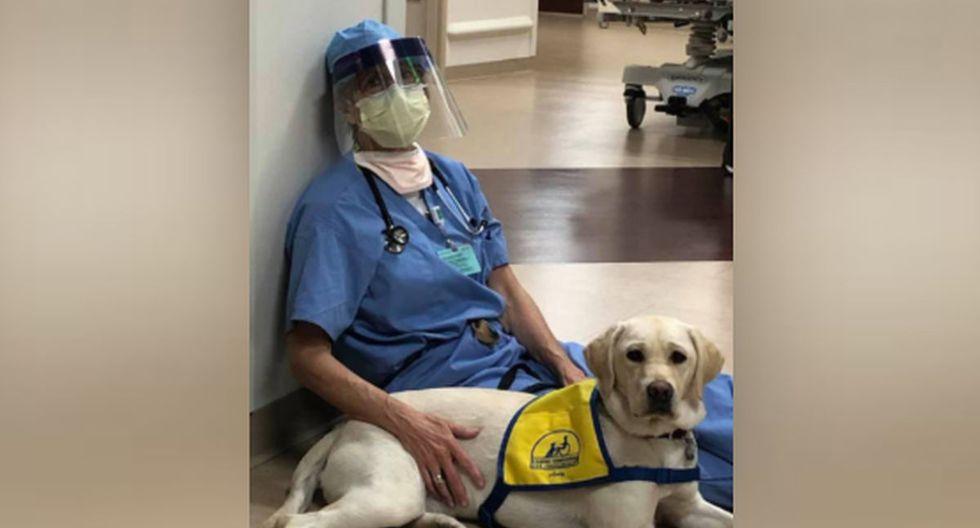 Su criadora voluntaria, la Dra. Susan Ryan, asegura que el personal de la salud encuentra consuelo en ella con solo acariciarla. (Facebook: Susan Ryan)