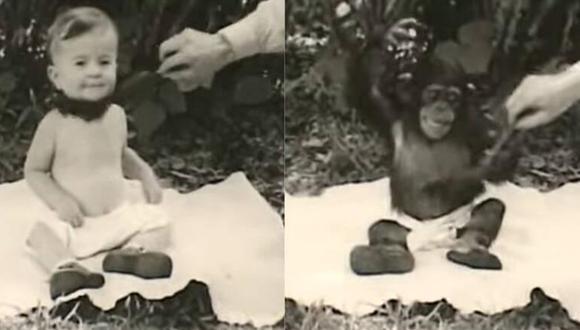 El experimento de Kellogg puso a un niño a convivir con un mono. (FOTO: YouTube: encliticcopula).