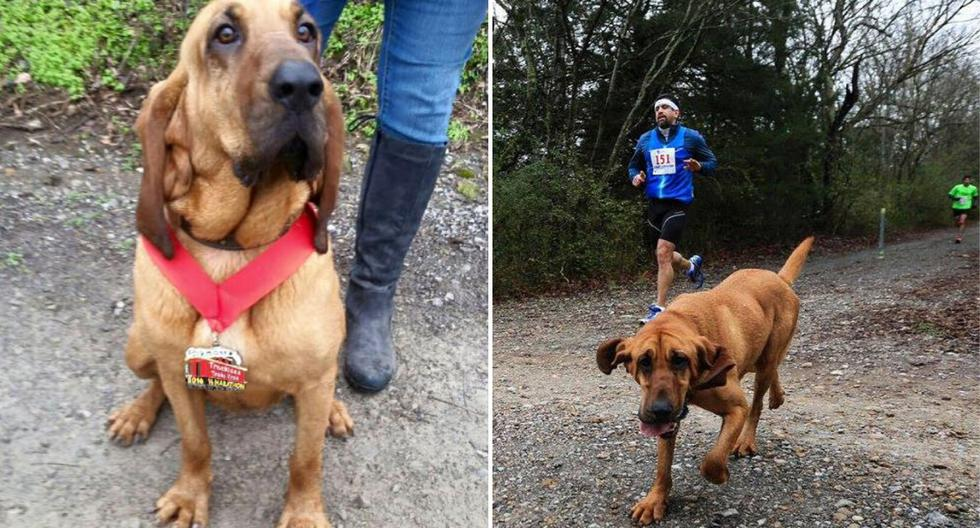 Una perrita se convirtió en la participante más peculiar de una media maratón sin que su dueña se enterara. (Foto: We Run Huntsville en Facebook)