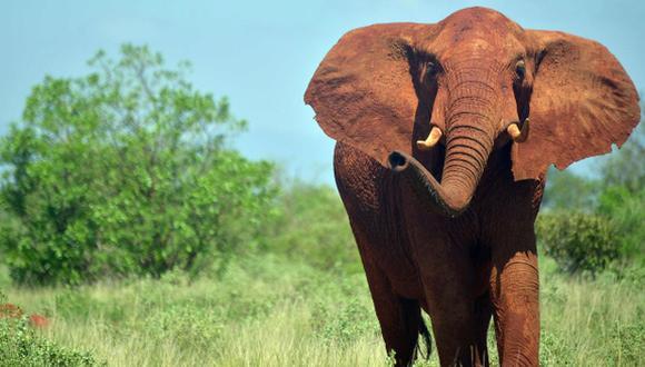 Una decena de países africanos fracasaron hoy en su intento de conseguir la prohibición del uso comercial de los elefantes del continente, al no prosperar ante la Convención sobre el Comercio Internacional de Especies Amenazadas (CIT