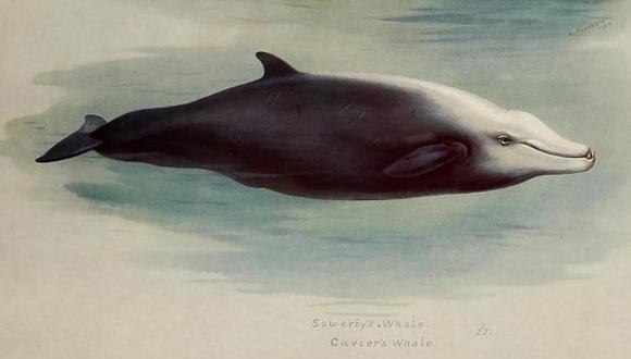 (Foto: Biodiversity Heritage Library/Flickr, licenciado vía Creative Commons)