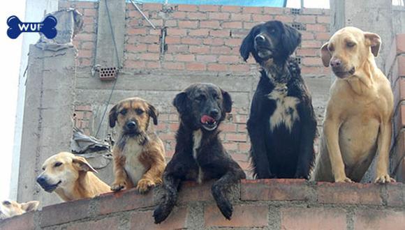 Aquí un grupo de perros del albergue Amor y Rescate no pueden más de la emoción al ver llegar la miniWUF llena de comida.
