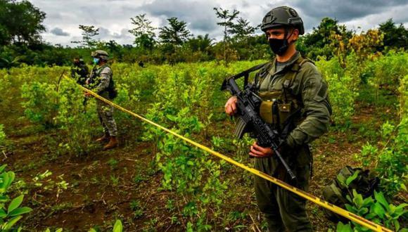 Por qué en Colombia se está produciendo más cocaína si hay menos coca. (Getty Images).