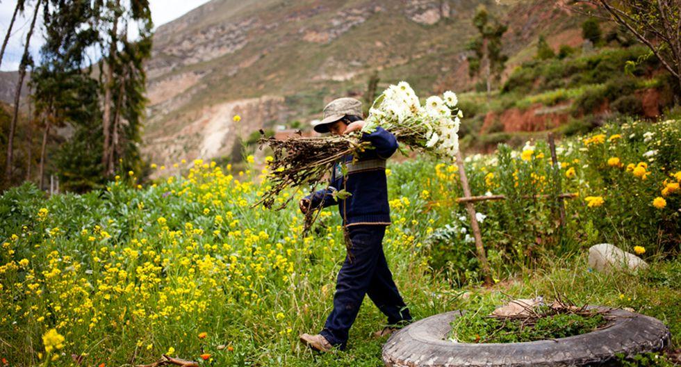 Deslúmbrate con la ruta de las flores y Semana Santa de Tarma  - 7