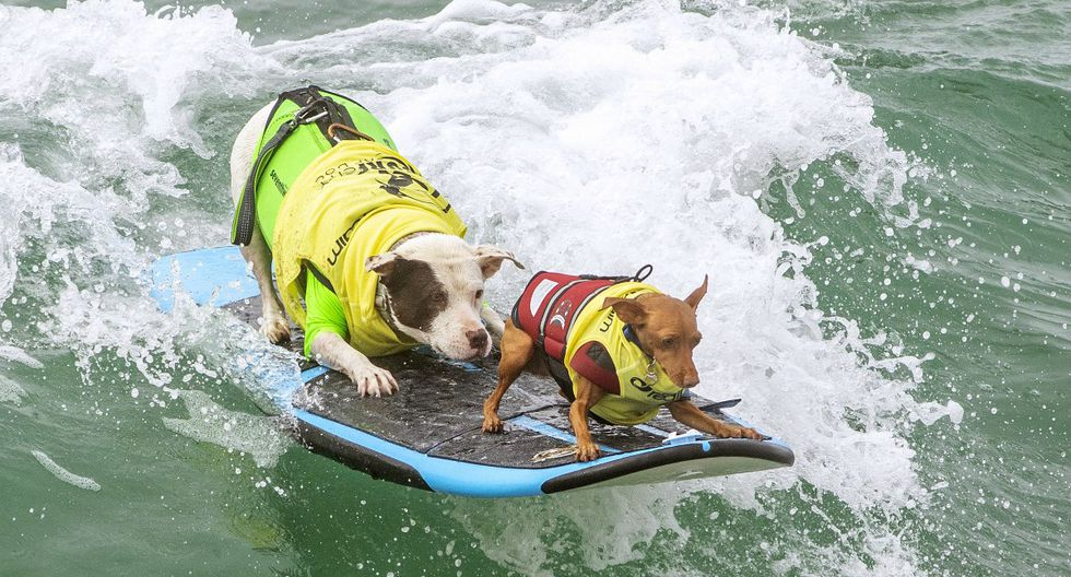 Faith y Rusty Wall compiten en el concurso Surf City Surf Dog 2019, en Huntington Beach, California (Estados Unidos). (Foto: Kyle Grillot/AFP)