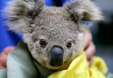 Los millones de koalas y otros animales que han resultado afectados por los incendios en Australia