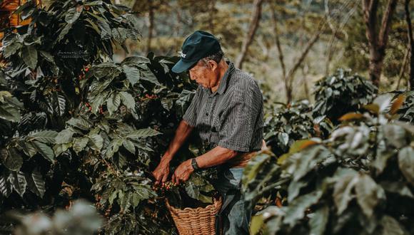 Veinte adultos mayores trabajan su propia marca de café que ya se vende en ferias de varias regiones del país. Sueñan con llevar su producto al extranjero. (Foto: Difusión)