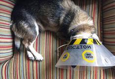 ¿Tu mascota se rasca mucho? Podría ser alergia estacional