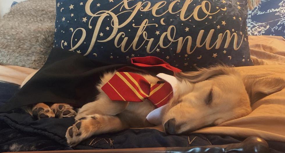 Una youtuber entrenó a su perro para que siga órdenes como hechizos de Harry Potter. (Fotos: Brizzy Voices en YouTube)