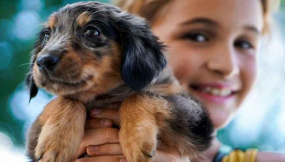Si se adopta con responsabilidad, un perro puede ser un gran compañero para tu familia. (Foto: R.D. Smith para Unsplash)