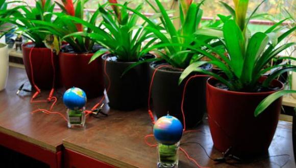 Científicos desarrollan plantas que producen electricidad