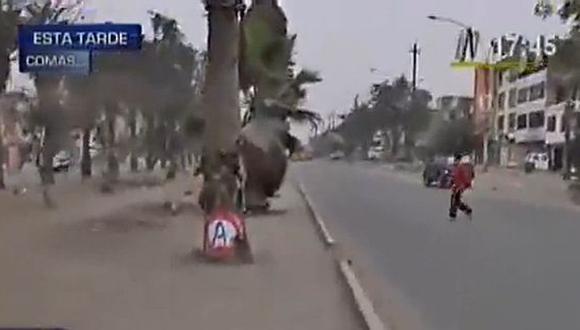 Candidata de Comas niega haber pintado palmeras en su distrito