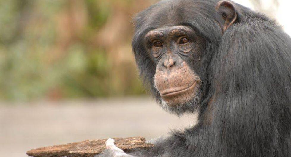Los monos son más inteligentes de lo que uno cree. (Foto: TheBusyBrain/Flickr)