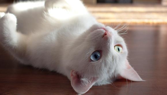 El truco para que los gatos no se suban a los muebles del hogar. (Foto: Pexels)