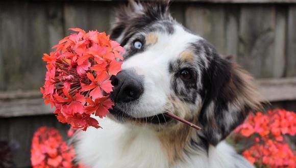 Hay muchas plantas que resultan tóxicas para las mascotas. (Foto: Spiritze / Pixabay)