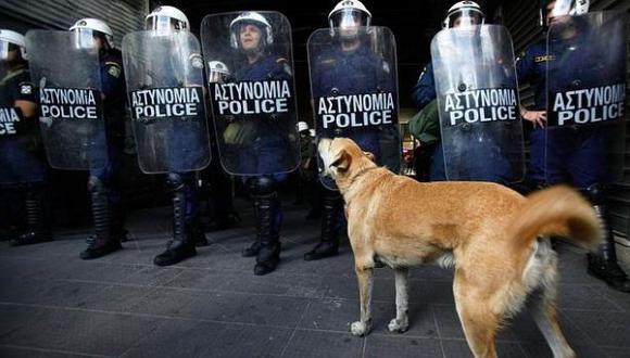 Murió Lukánikos, el perro símbolo de las protestas griegas
