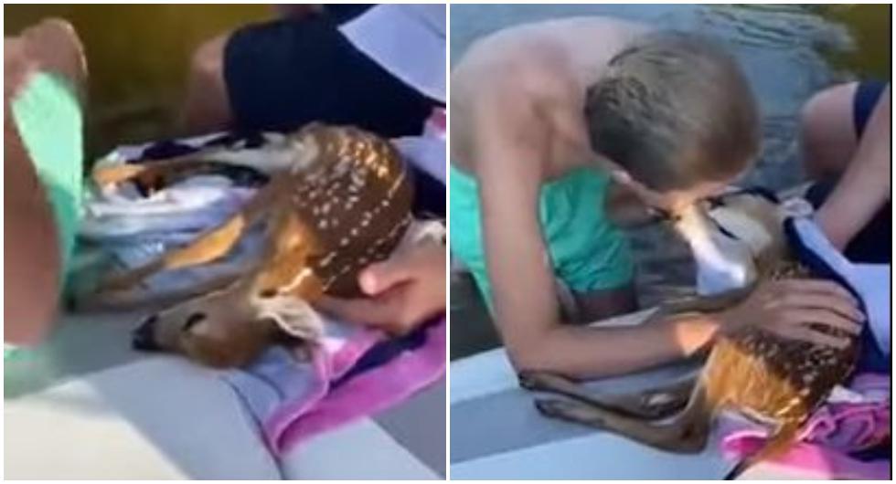 Rescataron un cervatillo ahogado, le dieron respiración boca a boca y le salvaron la vida. (Foto: Twitter)