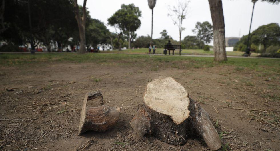 Los trabajos de renovación del Campo de Marte incluyen una rueda de la fortuna en medio del parque. (Foto: Renzo Salazar/El Comercio)