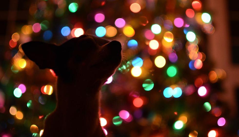 La Navidad es para pasarla con las personas que más se quiere y eso lo sabe muy bien una tierna cachorrita. (Foto: Pixabay)