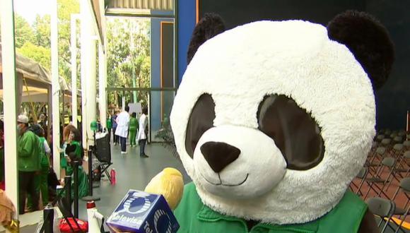 El oso panda ha causado revuelo en redes sociales por su singular nombre. (Imagen: Televisa)