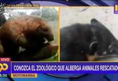 Moyobamba: Conozca al zoológico que refugia a animales rescatados