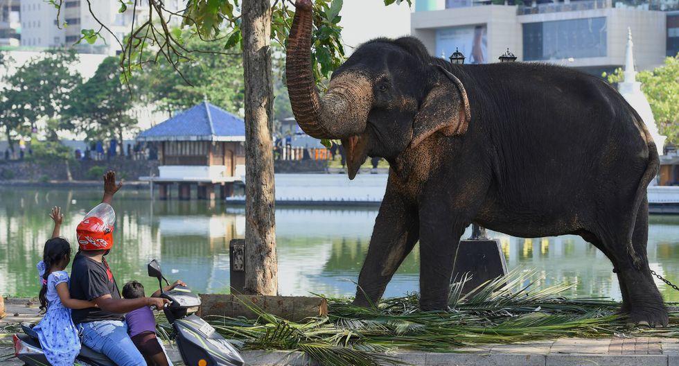 Viajeros interactúan con un elefante mientras descansa en una vía pública antes del festival anual de Perahera, del histórico Templo Gangaramaya, en Colombo, Sri Lanka. (Foto: Ishara S. Kodikara/AFP)