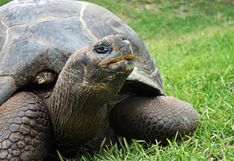 El Parque de las Leyendas agasajó a sus 68 tortugas por el día mundial de este reptil