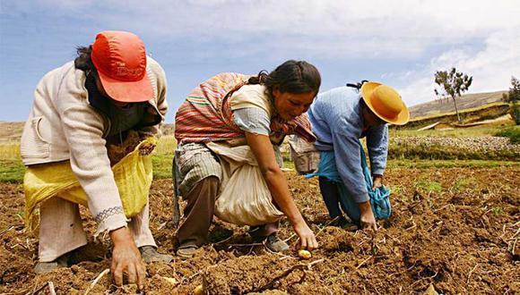 Existe una menor presencia femenina en las capacitaciones técnicas realizadas para mejorar la eficiencia y productividad en el campo. (Foto: Midagri)