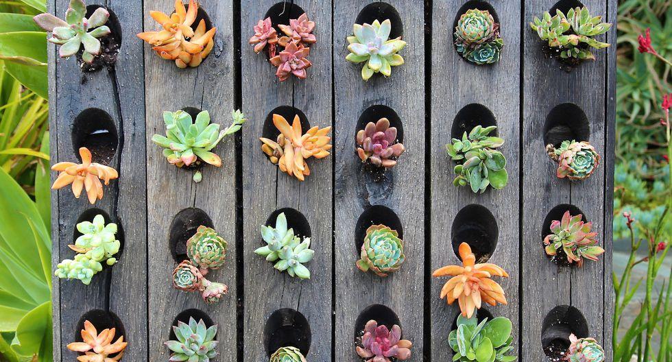 Plantas suculentas: decora con ellas tus espacios abiertos - 1