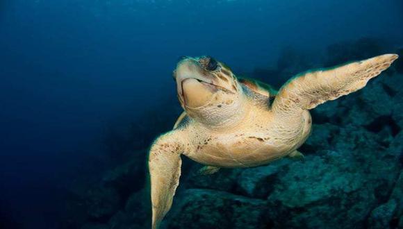 La Reserva Nacional Dorsal de Nasca es un ecosistema valioso que alberga un sinnúmero de especies marinas. (Foto: Minam)