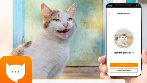 Akvelon busca que los dueños de gatos entiendan a sus felinos a través de sus maullidos. (Imagen: MEOWTALK/AKVELO)